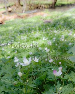 070karasawa150510.jpg